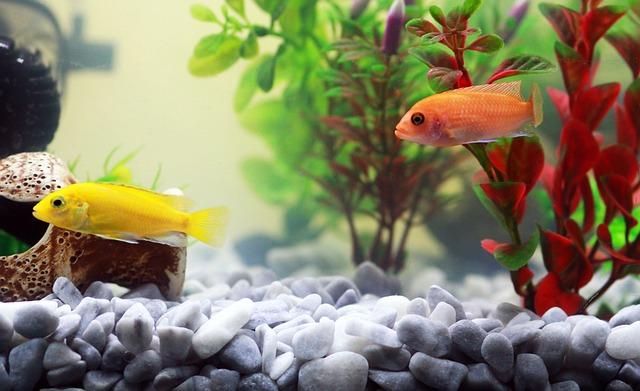 Ein Aquarium einrichten – Infos für Anfänger