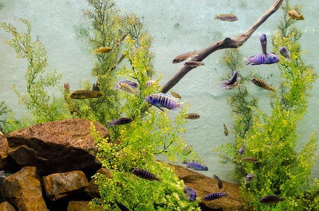 Der Kauf eines Aquariums – was muss ich wissen?