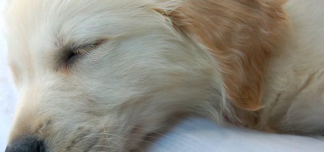 Auch Hunde liegen gern bequem