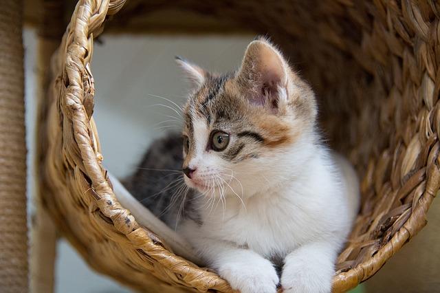 Kratzbäume – Katzenspaß in unterschiedlichen Ausführungen