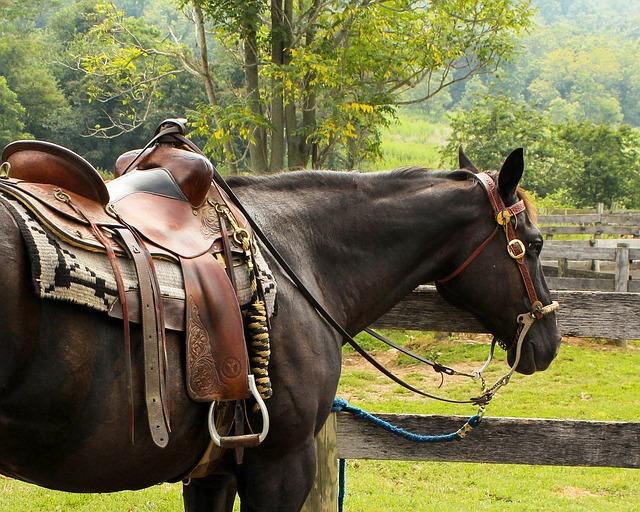 Grundausstattung für das eigene Pferd