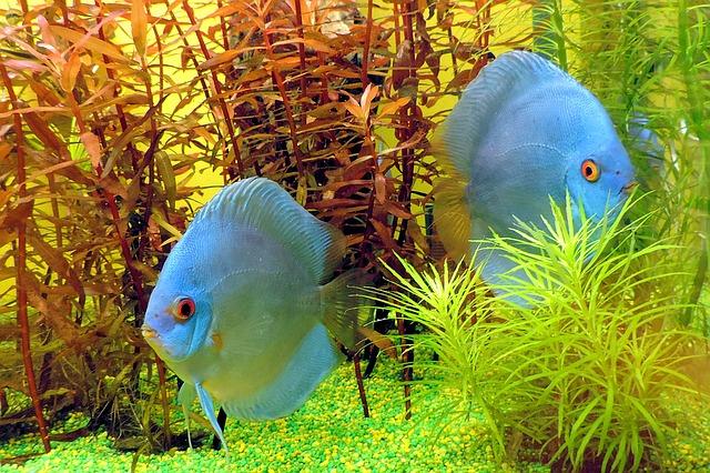 Warum Aquarien-Fans auf Zierfische vom Profi zurückgreifen