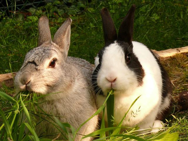 Kaninchen – was fressen sie?