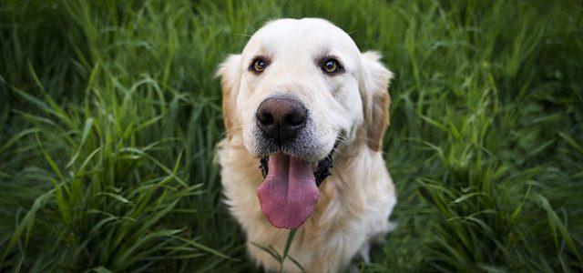 Hundeschule – Sinnvoll für Hund und Herrchen