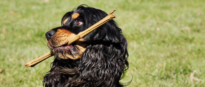 Kokosöl Hund