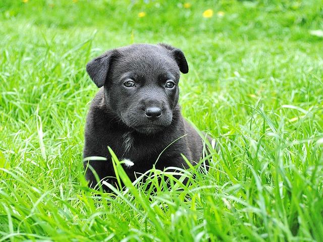 dog-279698_640
