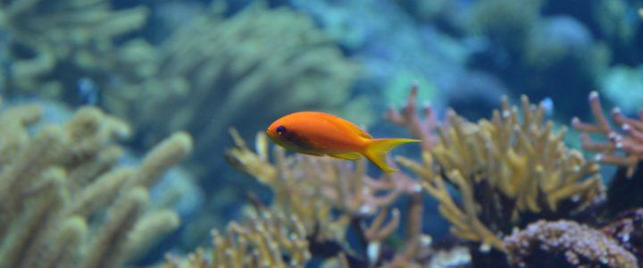 Nano-Aquarium- die kleinste Form eines Aquariums