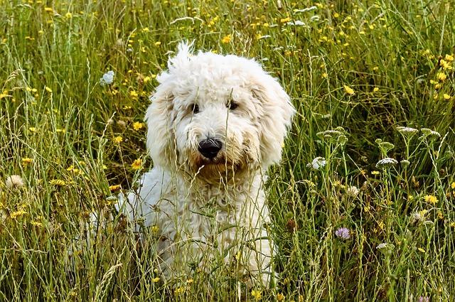 Zeckenschutz bei Hunden