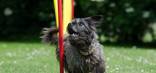 Hundesport – Beliebt bei Hund und Herrchen