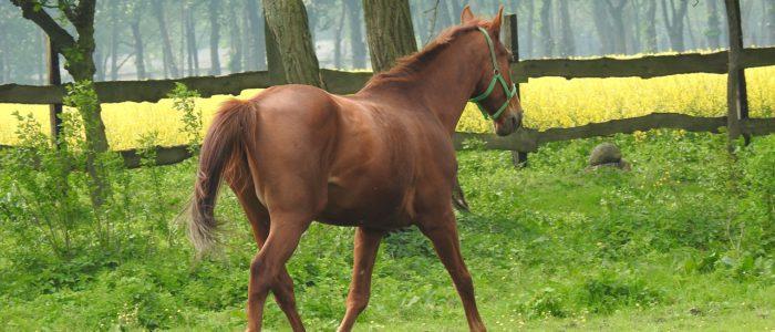 Pferdeheilpraktiker