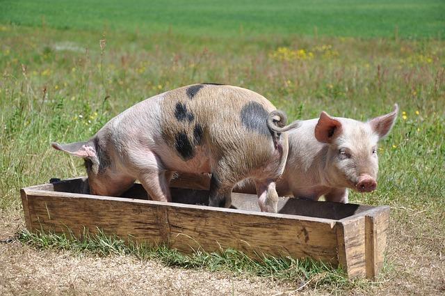 Haustierfutter und Futtermittel für Nutztiere – der Markt, Produkte und Hersteller