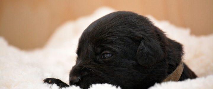Für den Hundewelpen nur der schönste Schlafplatz