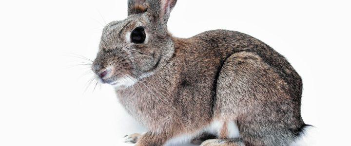 Darum sind Kaninchen keine Haustiere für kleine Kinder!